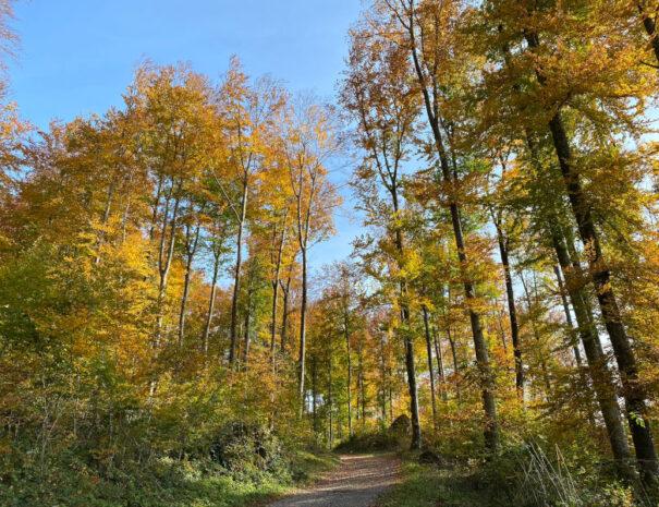 Herbst im Montafon