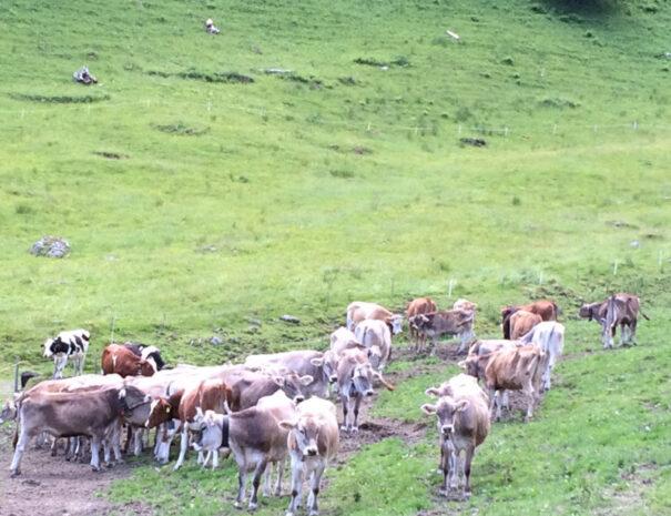 Alpwirtschaft Montafon